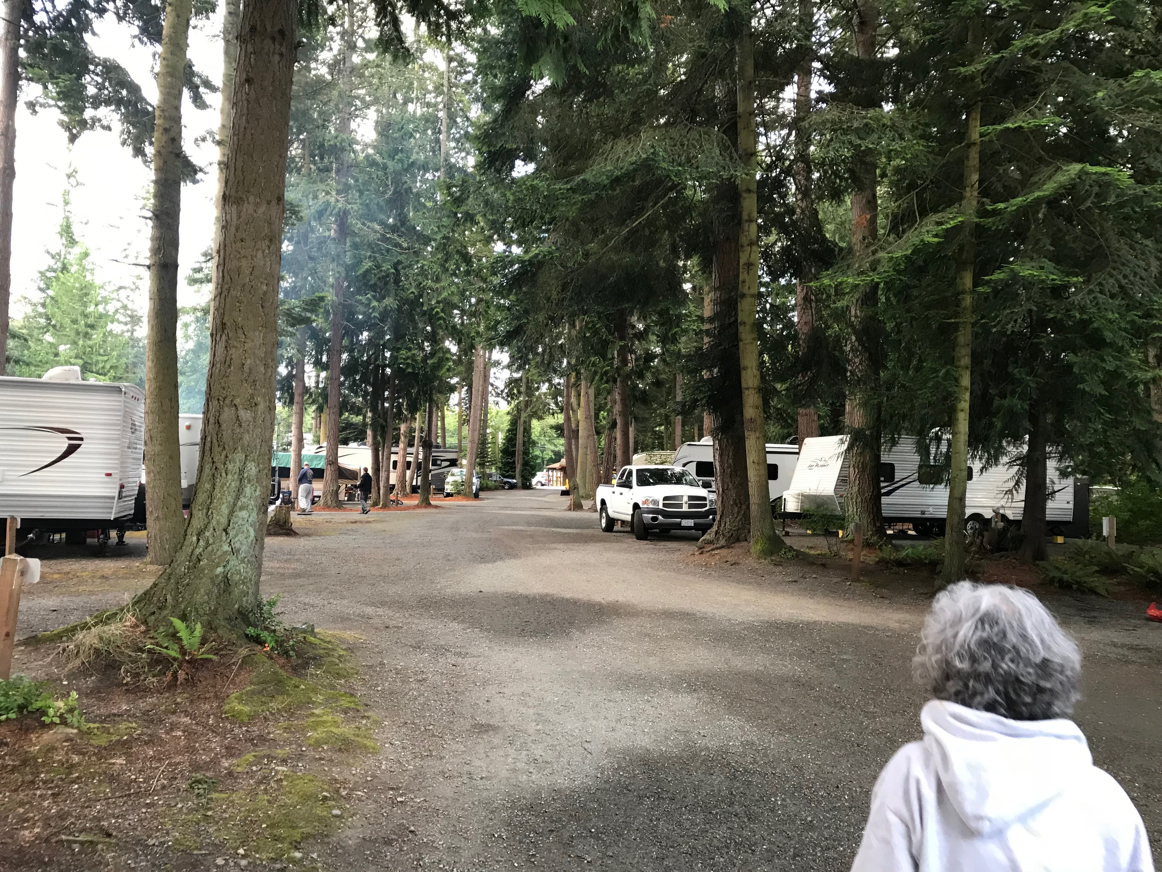 Forested Campground